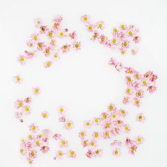 Vue élevée des fleurs décoratives sur la surface blanche