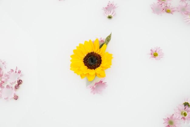 Vue élevée de fleurs jaunes et roses flottant sur l'eau