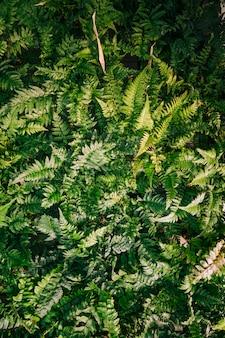 Une vue élevée de fougère feuilles fond