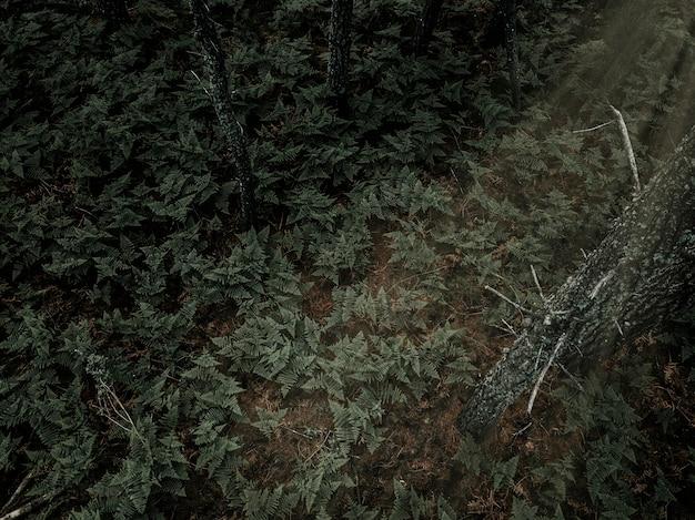 Vue élevée des fougères qui poussent dans la forêt tropicale