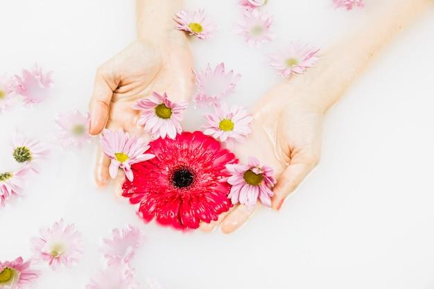 Vue élevée d'une main humaine tenant des fleurs rouges et roses dans l'eau du bain