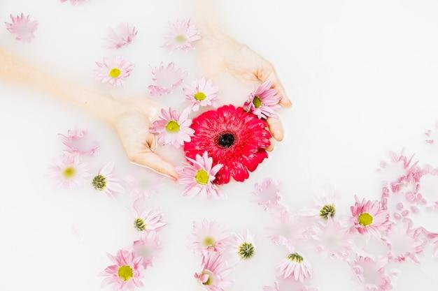 Vue élevée de la main d'une personne avec des fleurs rouges et roses
