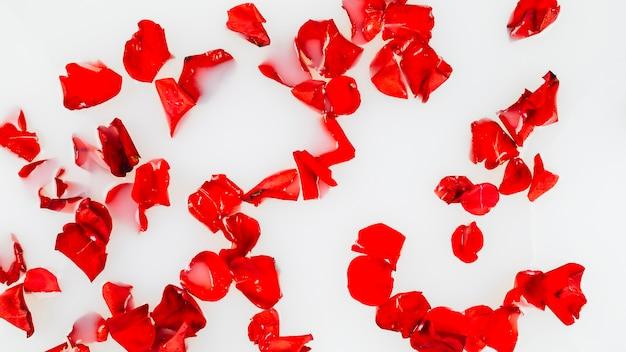Vue élevée de pétales de rose rouges flottant sur l'eau