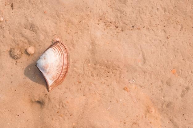 Une vue élevée de pétoncles sur le sable