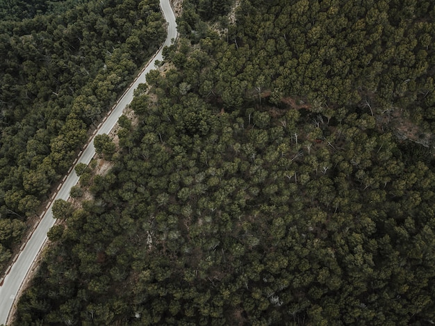Vue élevée de la route et des conifères verts