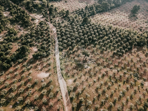 Vue élevée de la route du comté et des arbres