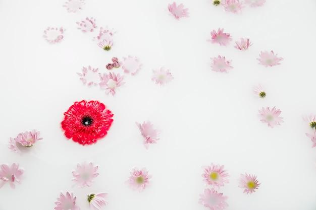 Vue élevée de la vue de belles fleurs rouges et roses flottant sur l'eau