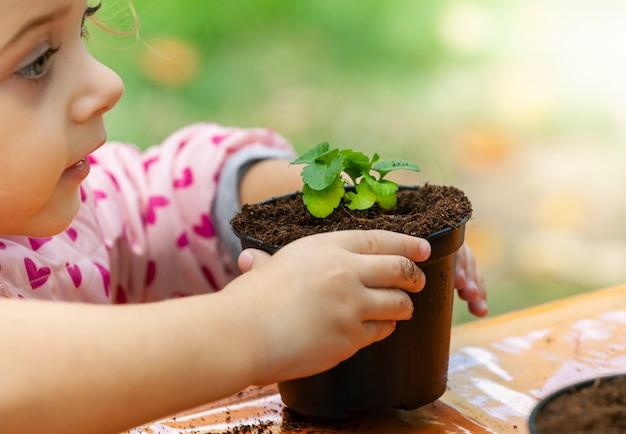 Vue d'un enfant en bas âge plantant de jeunes plants de betterave dans un sol fertile.