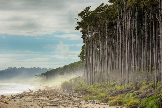Vue estivale de bruce bay, plage de pins rouges bordant la plage, île du sud, nouvelle-zélande