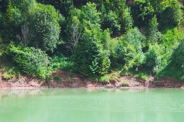 Vue sur un étang ou un lac vert rond naturel entouré d'arbres