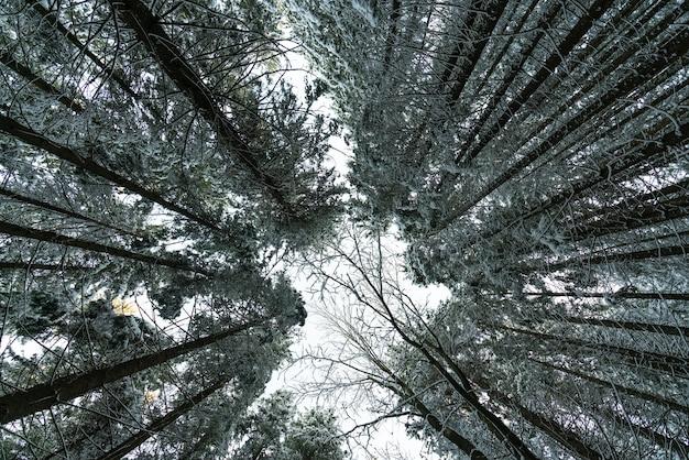 Vue extérieure de la forêt d'arbres