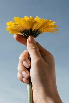 Vue de face de la belle fleur épanouie