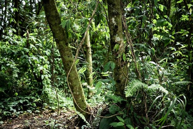 Vue de face belle forêt tropicale