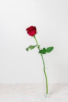 Vue de face belle rose rouge