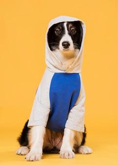 Vue de face chien mignon en costume