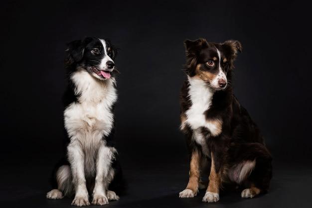 Vue de face de chiens mignons