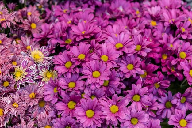 Vue de face collection de belles fleurs