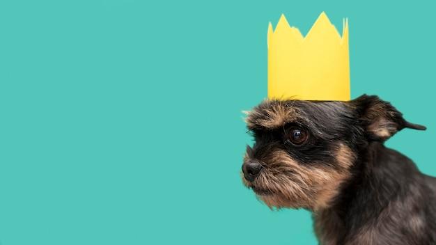 Vue de face du beau chien avec espace copie