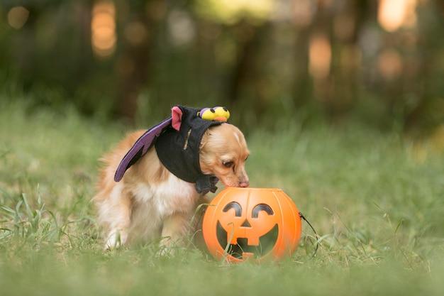 Vue de face du chien mignon en costume de chauve-souris