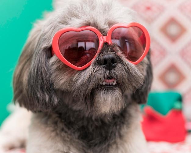 Vue de face du concept de chien mignon drôle