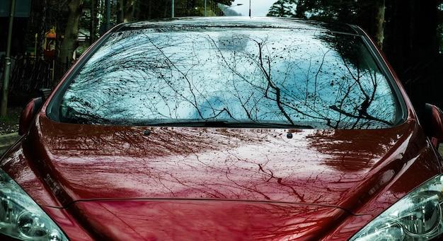 Vue de face du pare-brise de voiture rouge avec des branches d'arbres et reflet du ciel