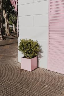 Vue de face du pot de fleurs dans la rue de la ville