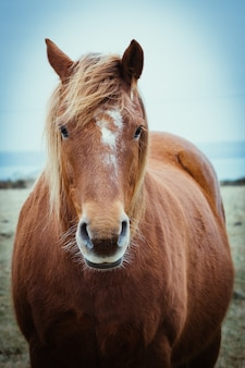 Vue de face d'un élégant cheval brun avec une longue crinière