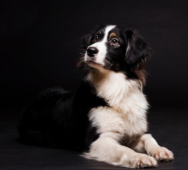 Vue de face mignon chien assis