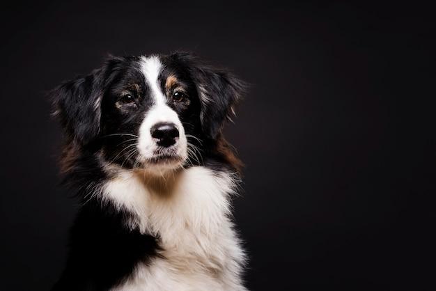 Vue de face mignon chien debout