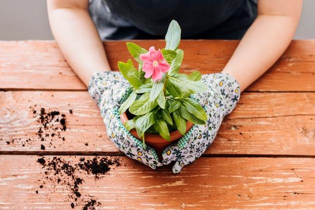 Vue de face d'une personne tenant un pot de fleurs