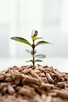 Vue de face de la plante poussant à partir de granulés