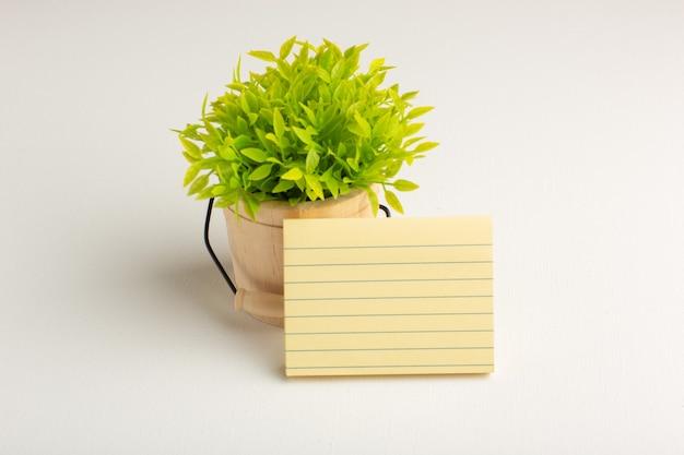 Vue de face plante verte avec du papier sur une surface blanche