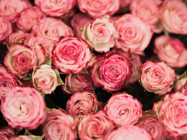 Vue de face de roses romantiques