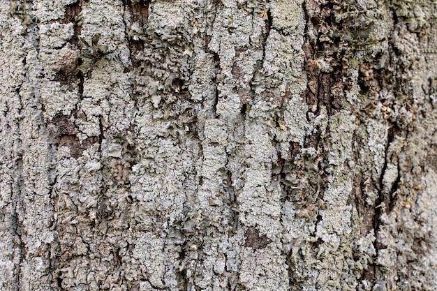 Vue de face de la surface de l'écorce des arbres