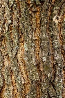 Vue de face de la texture de l'écorce des arbres