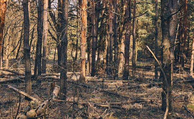 Vue de face de vieilles branches cassées d'arbres gisant sur le sol dans les bois