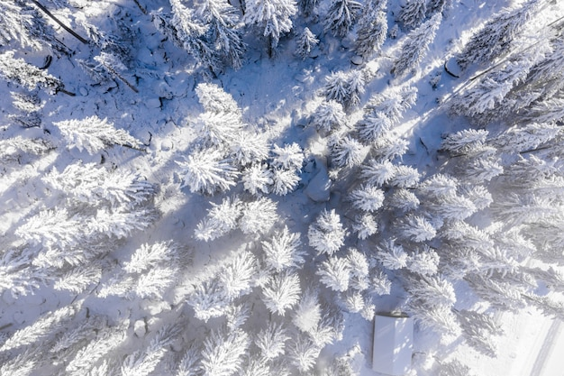 Vue fascinante sur de beaux arbres enneigés