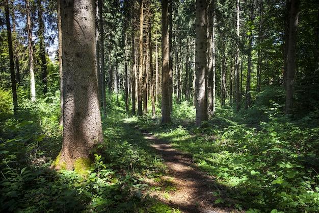 Vue fascinante sur une forêt par une journée ensoleillée à montanges, france
