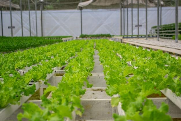 Vue d'une ferme de légumes verts hydroponique.