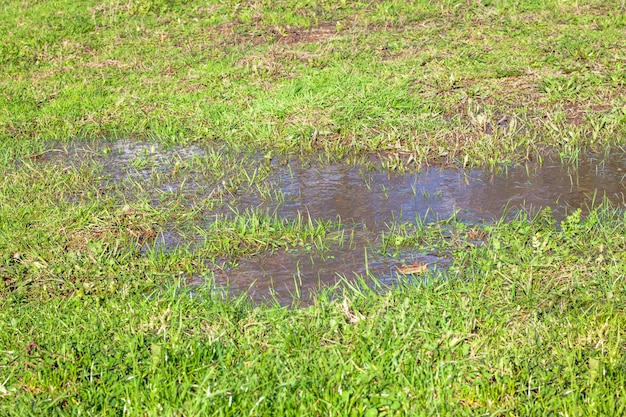 Vue d'une flaque d'eau et d'herbe
