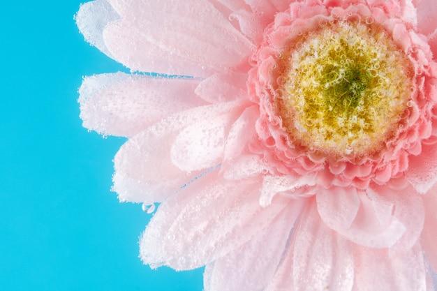 Vue d'une fleur de marguerite dans de l'eau gazeuse avec des bulles.