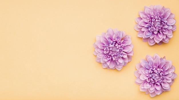 Vue florale ci-dessus avec fond jaune