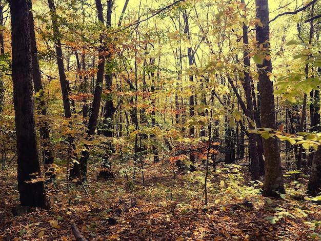 Vue de fond de fond naturel de la montagne à la forêt ci-dessous, nature de la russie.