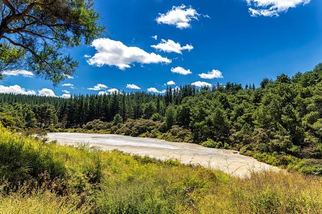 Vue sur la forêt de conifères dans le parc thermal de wai-o-tapu à rotorua, nouvelle-zélande