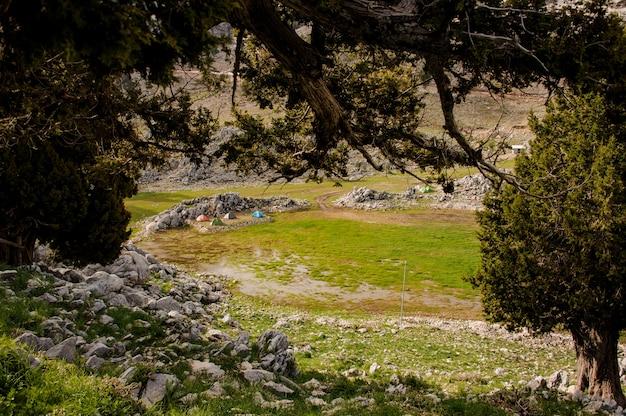 Vue, de, forêt, dans, hautes terres turques