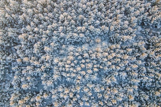 Vue sur la forêt en hiver ou en automne depuis un drone
