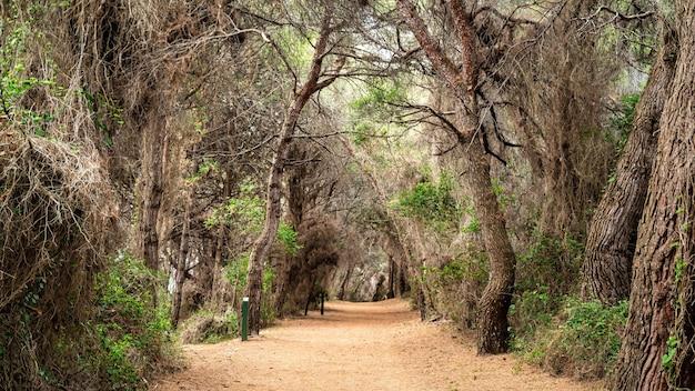 Vue sur la forêt de l'île de sainte-marguerite, france
