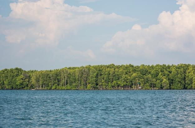 Une vue de la forêt de mangrove avec la mer et les nuages blancs dans le ciel bleu