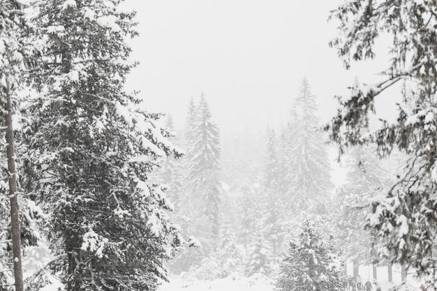 Vue sur la forêt recouverte de neige