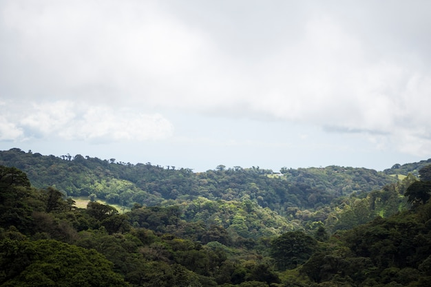Vue de la forêt tropicale au costa rica